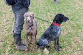 foto of hunters  - hunting dogs with hunter - JPG