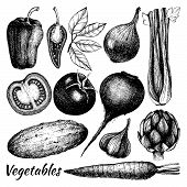 picture of root vegetables  - Vector collection of ink hand drawn vintage vegetables - JPG