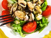 picture of clam  - Green salad with clams and tomatoes - JPG