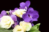 stock photo of epiphyte  - Bouquet with purple orchids roses flower in black background - JPG