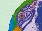 Macaw Art2