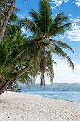 image of boracay  - Tropical beach with beautiful palms and white sand Philippines Boracay Island - JPG