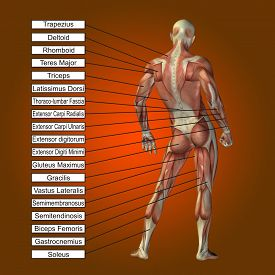 stock photo of human muscle  - Concept or conceptual 3D male or human anatomy - JPG