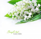 pic of lillies  - lily of the valley - JPG