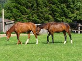 foto of feedlot  - show two lucky horses out at feed  - JPG