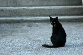 stock photo of black cat  - black cat - JPG