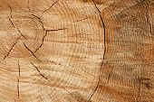picture of decomposition  - wood texture - JPG