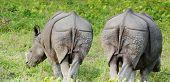 2 rinoceronte negro em Chitwan N.P. Nepal