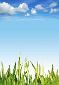 Blue sky with fluffy white clouds background with fresh green grass poster