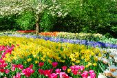 stock photo of tourist-spot  - Colorful springflowers and blossom in dutch spring garden  - JPG