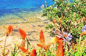 Bird in torch lily flowers in Manly beach, Sydney Australia