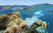 The World Ocean Pollution. Beautiful Tropical Coral Reef With Sea Anemones, Clownfish And Colorful C poster