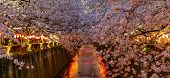 Meguro Sakura (cherry Blossom) Festival. Cherry Blossom Full Bloom In Spring Season At Meguro River, poster