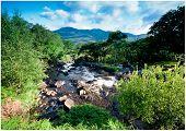 Mountain stream with lush greenery . Killarney, ireland