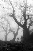 Man walking in a dark and mysterious foggy forest