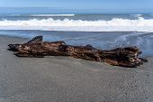 Dead Wood On The Beach Of Hotikita New Zealand, Amazing Beach In New Zealand, Amazing Ocean Image Wi poster