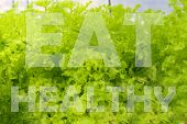Eat Good Feel Good, Eat More Green, Eat Well Live Well, You Are What You Eat Words On Hydroponics Gr poster