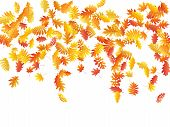 Oak, Maple, Wild Ash Rowan Leaves Vector, Autumn Foliage On White Background. Red Orange Yellow Oak  poster