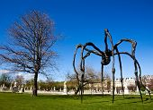 Big Black Spider In Garden Of Versailles