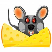 Baby Mouse With Cheese