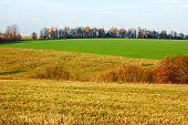 Campos y prados en otoño