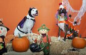 Pitbulls dressed up for Halloween