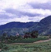 Jungle Farm 2