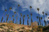 Citrus Park Palms