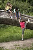 Full length of three friends climbing on fallen tree