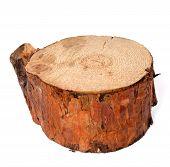 Stump Of Pine Tree