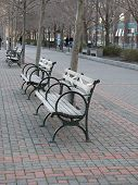 Row Of Park Benches