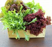 Green and red lettuce in a basket