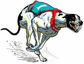 Greyhound Racing Dog
