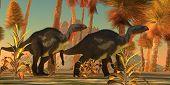 Camptosaurus Dinosaurs