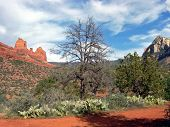 Sedona, Arizona scene