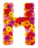 Letter H - Flower Alphabet Isolated On White