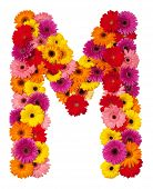Letter M - Flower Alphabet Isolated On White