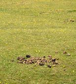 Horse Manure In A Green Field