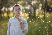 Cute little boy blowing dandelion