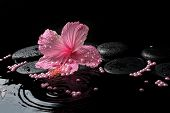 Beautiful Spa Concept Of Delicate Pink Hibiscus, Zen Stones With Drops And Pearl Beads On Ripple Wat
