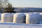 Silage Bales In Snow