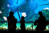 Silhouettes Of People In The Oceanarium And Beautiful Fish