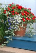 picture of potted plants  - A terracotta garden planter filled with impatiens and lobelia.