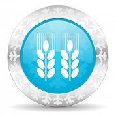agricultural icon, christmas button