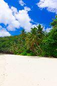Bay Palms Jungle