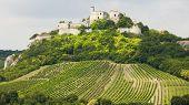 ruins of Falkenstein Castle with vineyard, Lower Austria, Austria