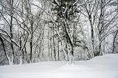 Winter snowfall in Shirakawa, Japan
