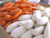 Fresh white radish and carrots