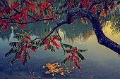 Vintage Look With Tree In Autumn On The River Shore