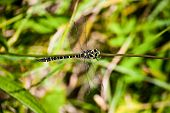 stock photo of flying-insect  - green and yellow dragonfly  a flying insect - JPG